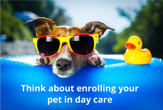 enrolling your pet in daycare