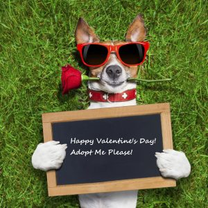 adopt for valentine's day