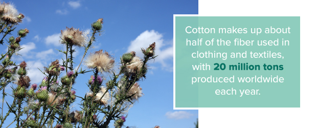 cotton used for textiles