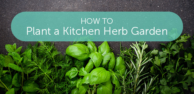how to plant a kitchen herb garden