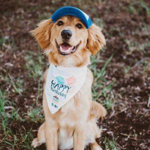 custom dog clothing